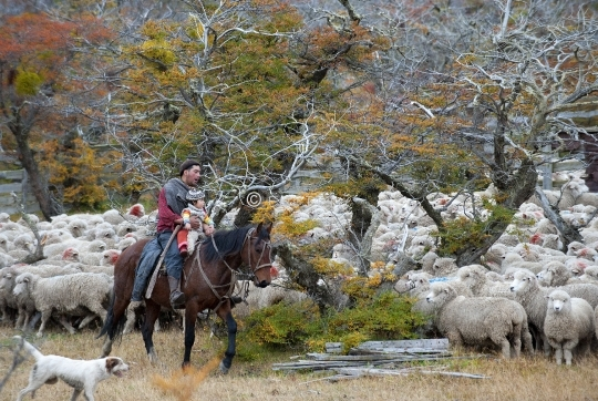 Gaucho in Patagonia